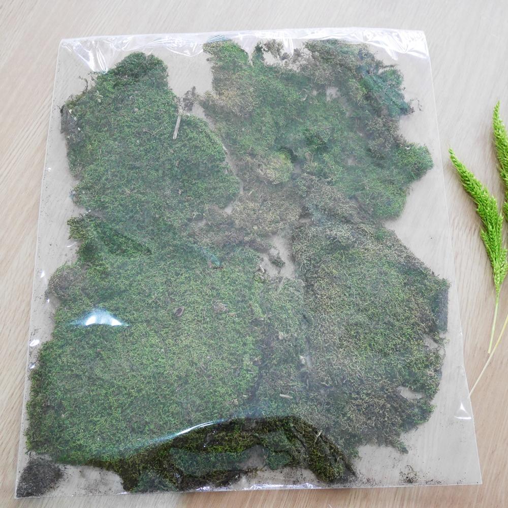 มอสน้ำตาล (Brown moss)