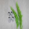 พิมพ์ตัด ดอกช้างกระจิ๋ว ( (Rhynchostylis Flower SS cutter)