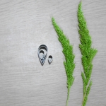 Plumeria (Super small)