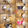 กลองชุด Jobeky 3ใบ รุ่น Jazz320 Black Ash Wood (คละหลาย)